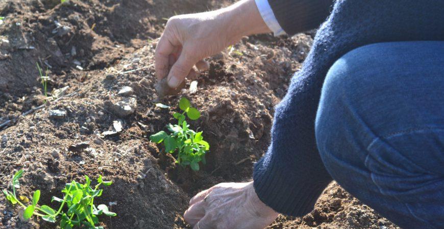 Venta de semillas y plantel
